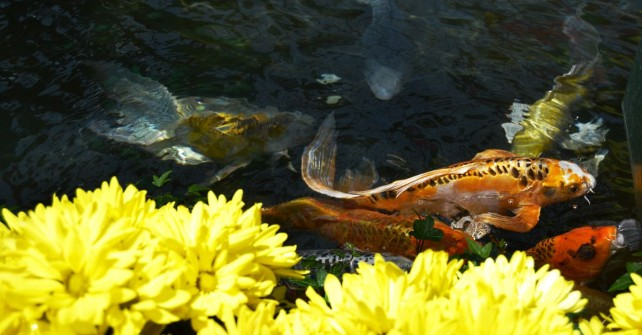 Exotic fish at the Conservatory and Botanical Gardens