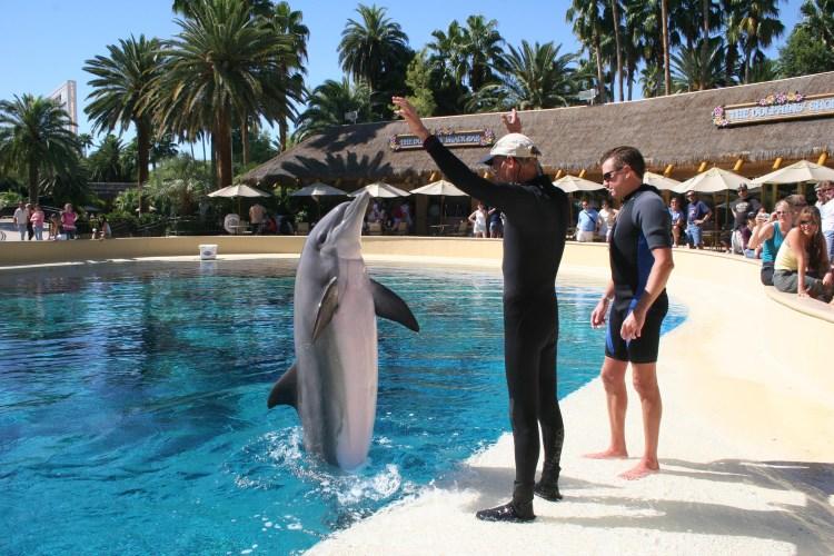Mirage Las Vegas - Dolphin