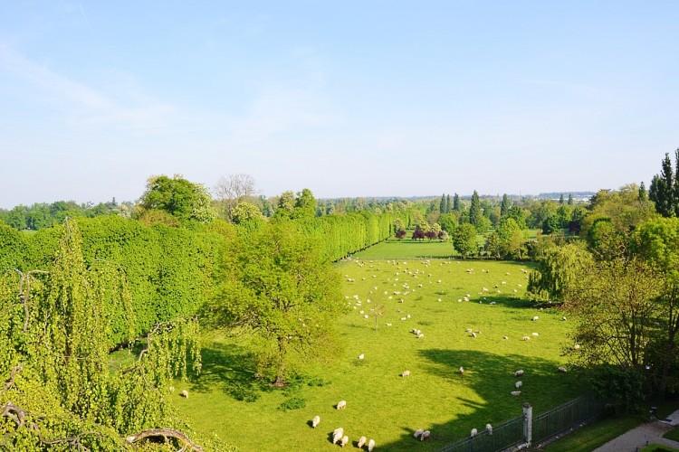 The view over the Château de Versailles park