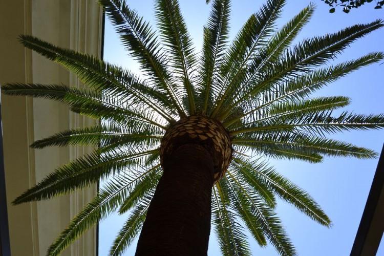 Four Seasons Las Vegas palm tree