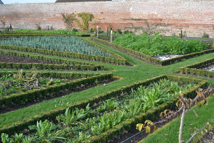 Perfectly aligned kitchen garden box hedges