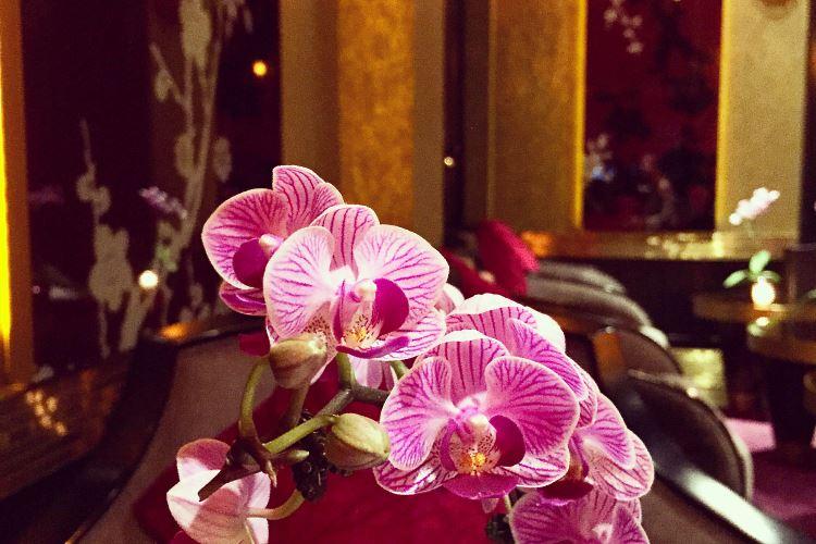 Orchidées au bar le Qu4tre du Buddha Bar Paris