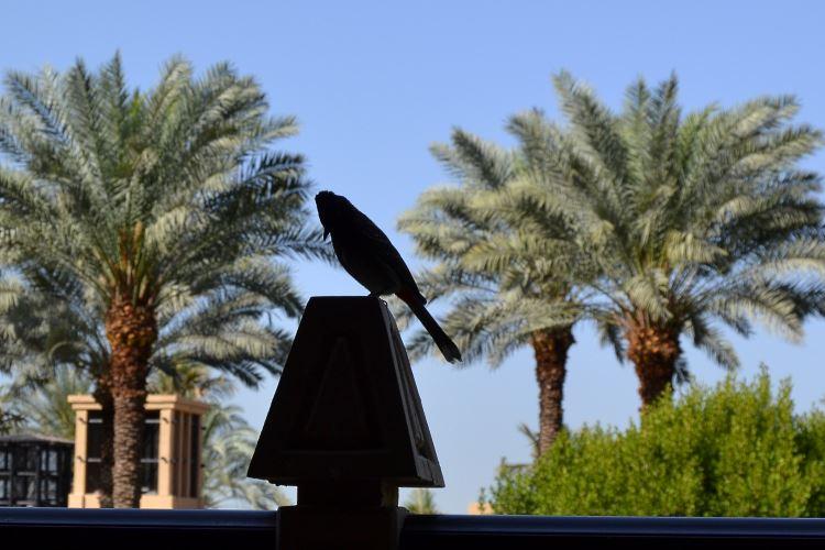 Dubai bird