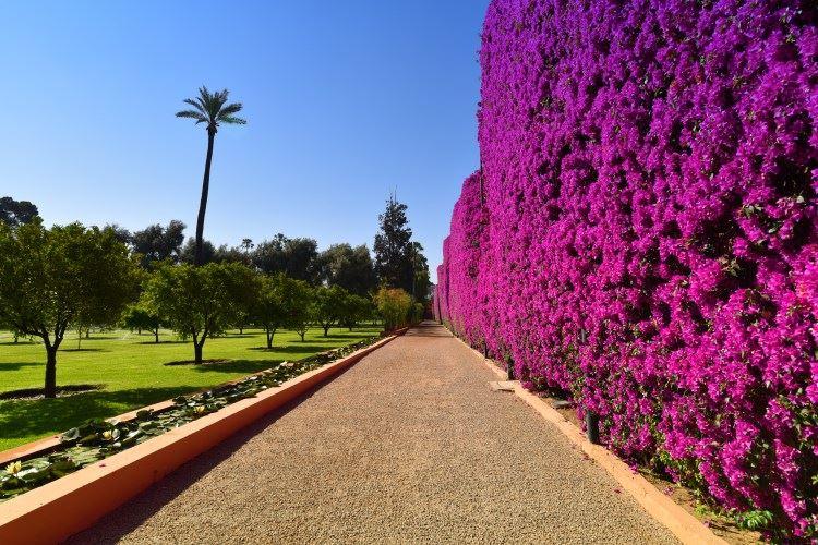 La Mamounia Marrakesh garden