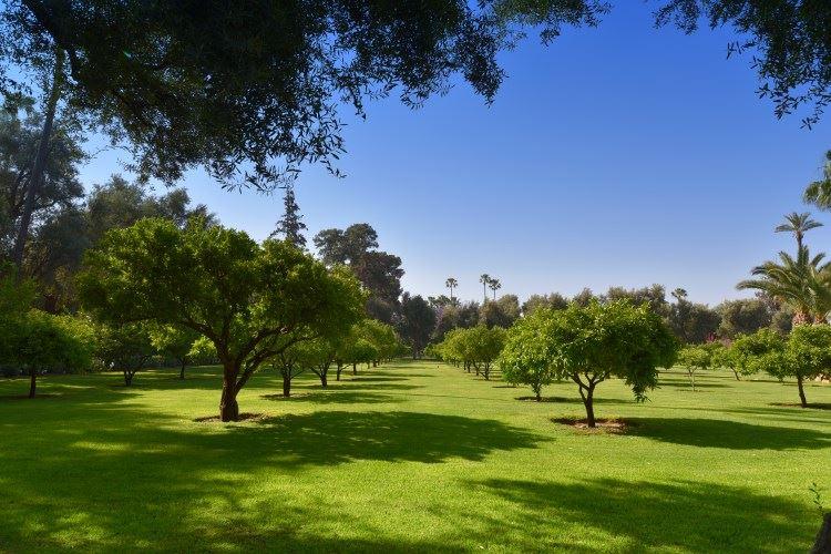 Garden La Mamounia Marrakesh