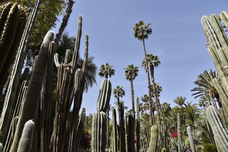 Majorelle Garden Morocco cactus