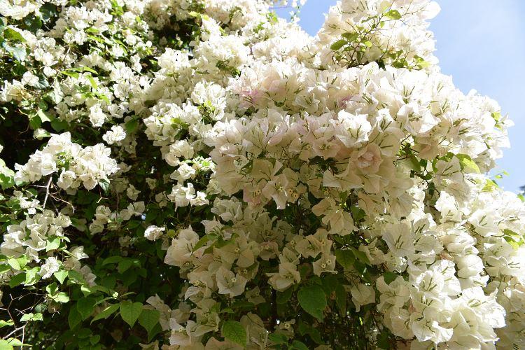 Majorelle Garden flowers