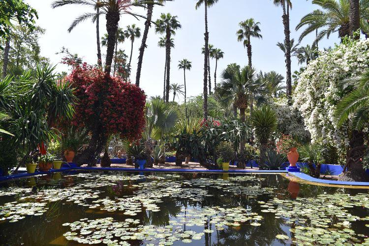 Majorelle Garden pool