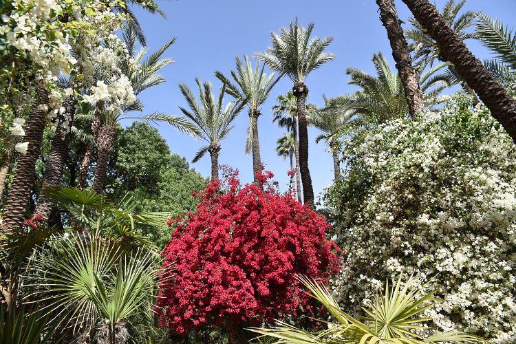 Majorelle Garden Marrakesh flowers