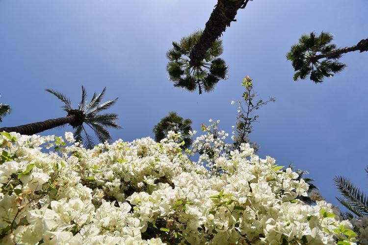 Majorelle Garden palm trees