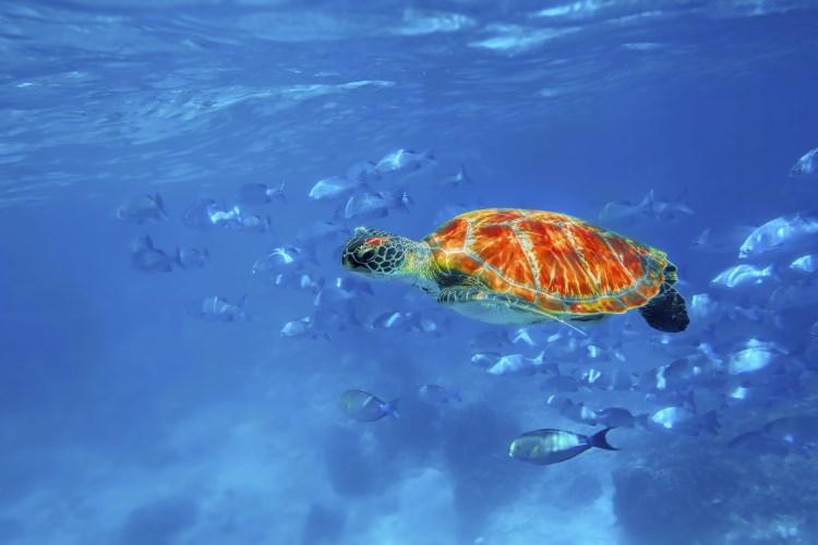 Four Seasons Resort Koh Samui - Les magnifiques fonds marins